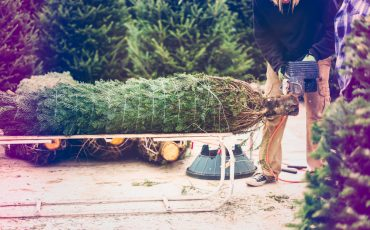 live christmas trees and allergies Archives - Austin Family ...